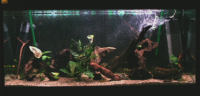Full tank picture